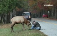 В США олень напал на фотографа